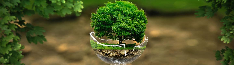 terre-arbre